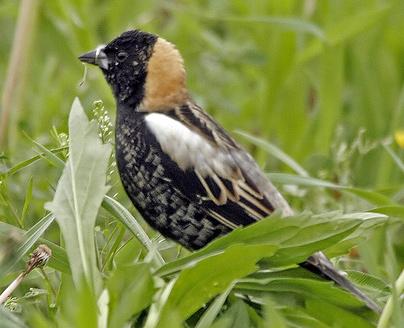 field birds