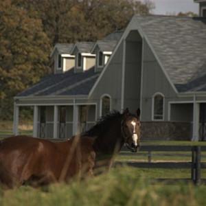serosun horse 640x360